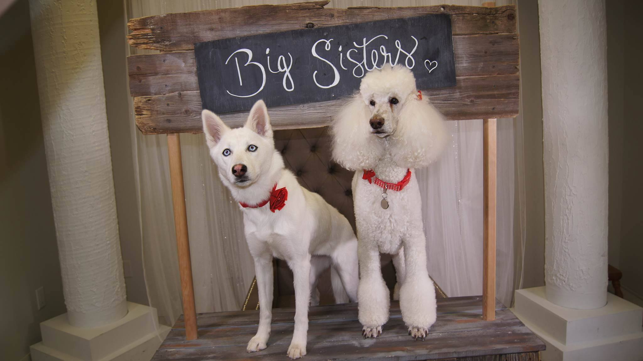 Dog sisters