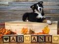 2015 September Armani 01