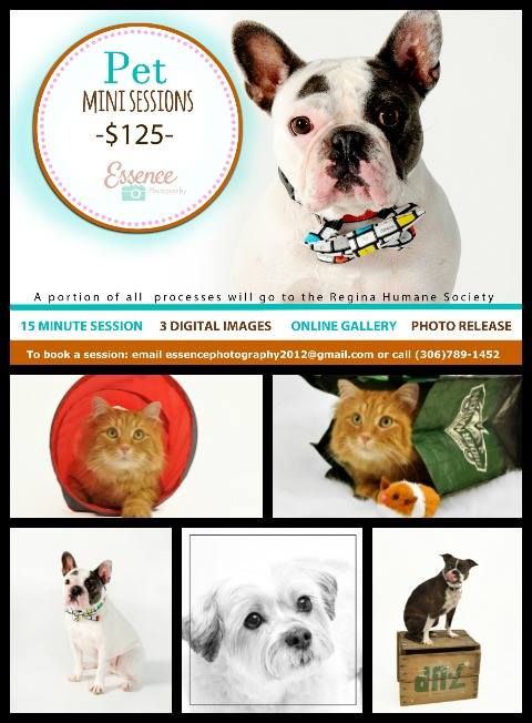 U-Snap Studios is pleased to announce PET MINI SESSIONS with