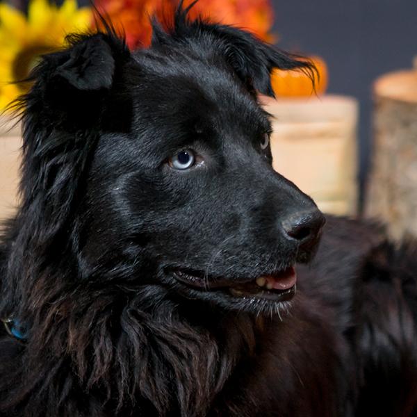 Bright Eyes Dog Rescue Regina